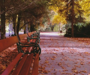 autumn, benches, and colorful image