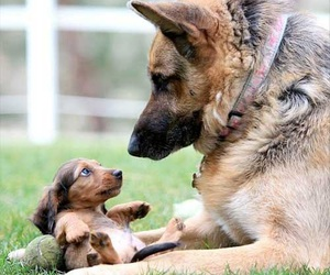 dog, puppy, and adorable image