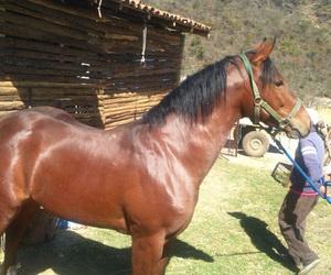 boyfriend, rancho, and caballo image