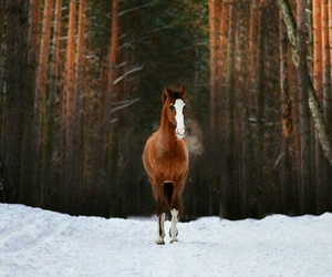 horse, forest, and winter image