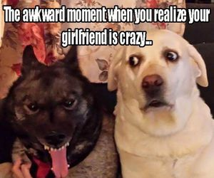 dog, funny, and crazy image
