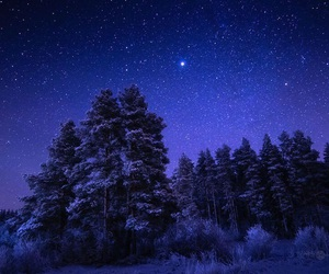 stars, forest, and snow image