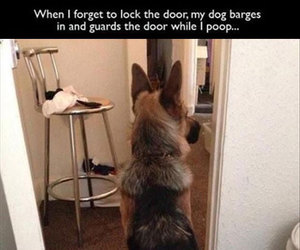 funny and dog image