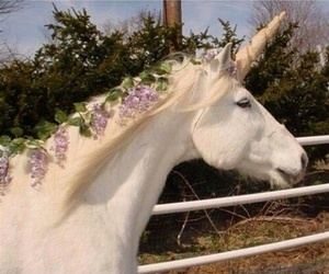 unicorn, flowers, and horse image