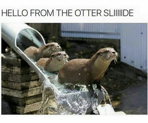 funny, Adele, and otter image