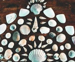 summer, beach, and shells image