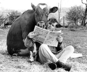 cow, newspaper, and reading image