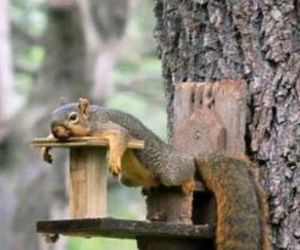 squirrel, feeder, and tree image