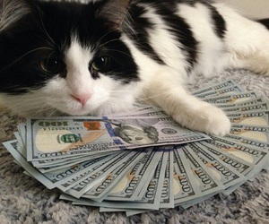 cat, money, and animal image