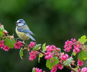 bird, blue, and plant image