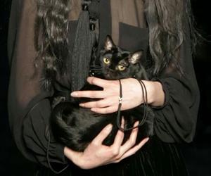 cat, black, and fashion image