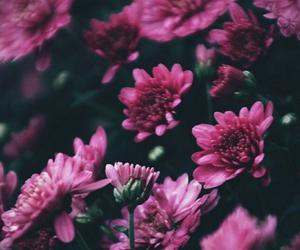 dark, flowers, and nature image