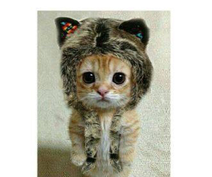 cat, cold, and cute image