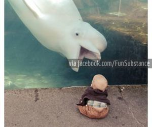 awesome, beluga, and Best image