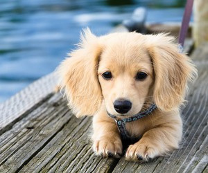 pets, water, and puppy image