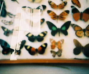 butterfly, indie, and vintage image