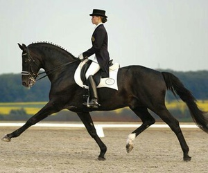 dressage, horse, and concours image