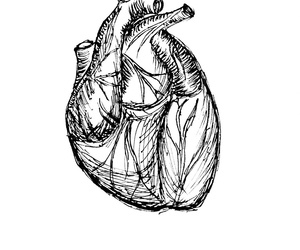 drawing, heart, and ink image