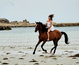 cheval, equitation, and horses image
