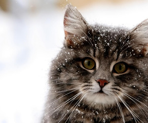 animals, winter, and cats image
