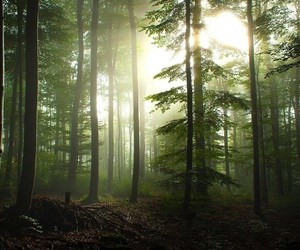 nature, forest, and trees image