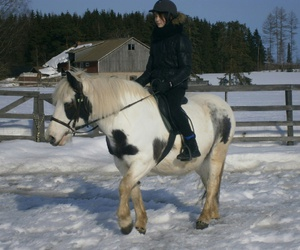 equestrian, forest, and me image