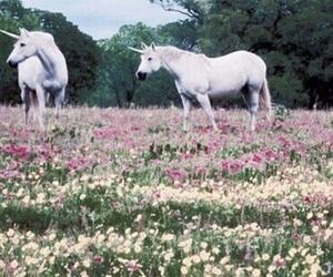 unicorn, flowers, and white image