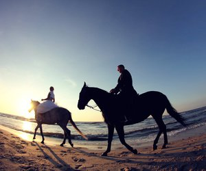 horse, sun, and wedding image