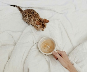 cat, coffee, and cute image