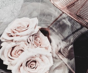 rose, flowers, and theme image