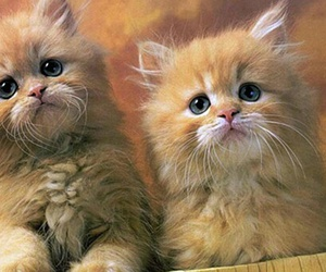 cat, adorable, and kitten image