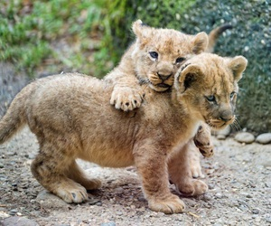 babies, cute, and cub image