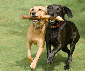 animals, best friends, and dogs image