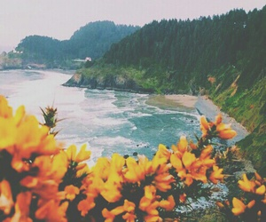 flowers, beach, and tropical image