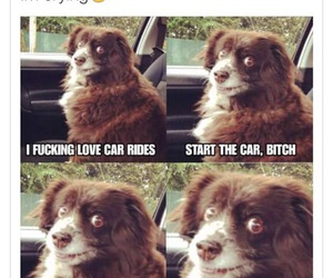 funny, dog, and car image