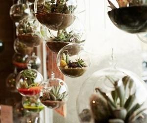 plants, indie, and vintage image