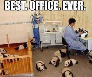 panda, cute, and office image