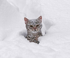 cat and snow image