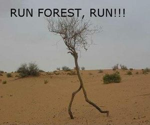 funny, run, and forest image