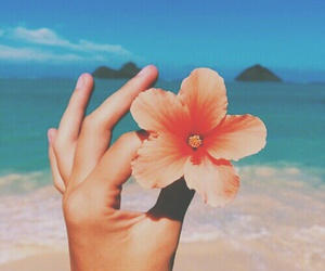 flowers, beach, and summer image