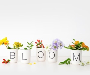 bloom and flower image