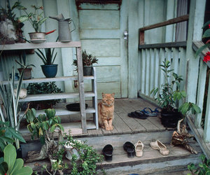 cat, house, and plants image
