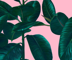 plants, pink, and wallpaper image