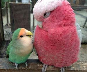 bird, pink, and green image