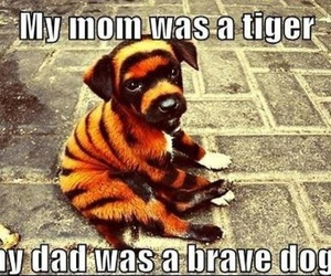 dog, tiger, and funny image