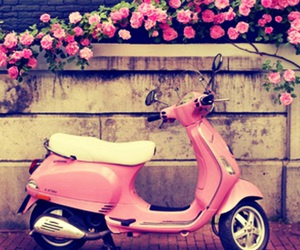 pink, roller, and roses image