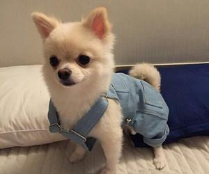 beauty, dog, and fashion image