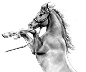 art, chevaux, and dessin image