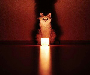 cat, candle, and shadow image
