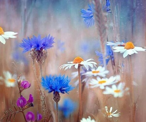 amazing, flowers, and picture perfect image